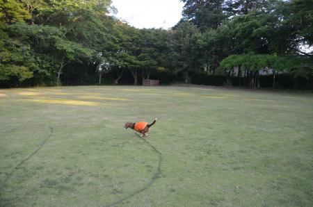 20130603激走羽黒山公園08
