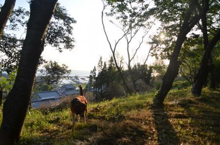 20130603激走羽黒山公園20