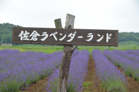 20130612佐倉ラベンダーまつり09
