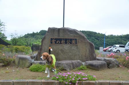 20130612宮の杜公園01