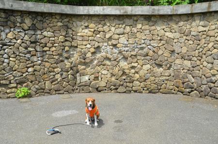 20130617浅間山公園03