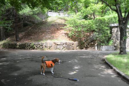 20130617浅間山公園01