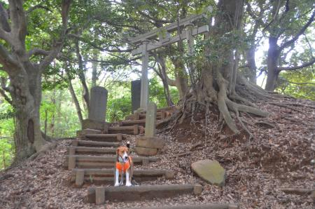 20130617浅間山公園08