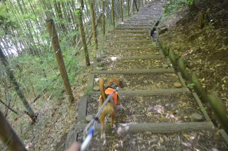 20130617浅間山公園17