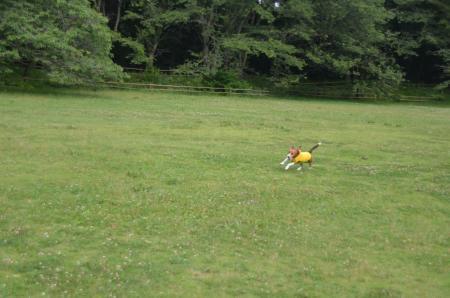 20130622激走 佐倉城址公園14