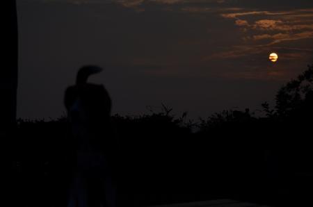 0130624印旛沼夕景08