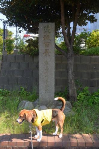 20130629塚原卜伝の墓15