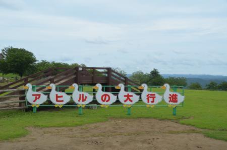 20130703マザー牧場22