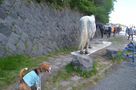 20130711富士山五合目16