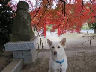紅葉の神社 (7)