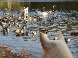 白鳥さんと (7)