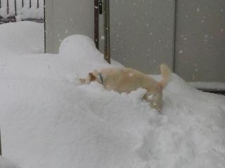 大雪 (3)