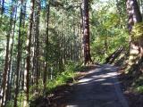 杉並木の参道を登る