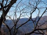 木の枝越しに見える富士山