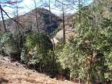 踊平から見える林道