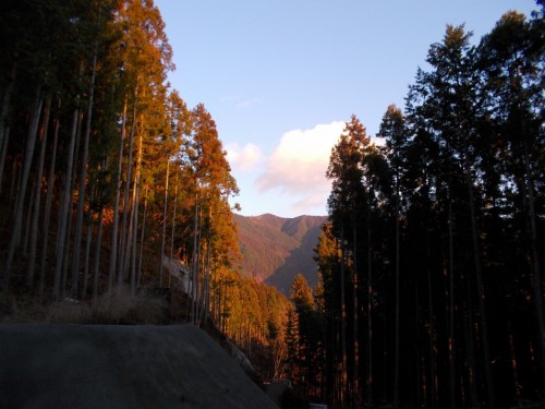 川乗山から本仁田山へ