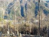 丹波山村の集落