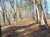 高尾天平の並木