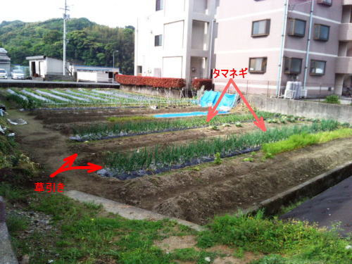 onion251.jpg