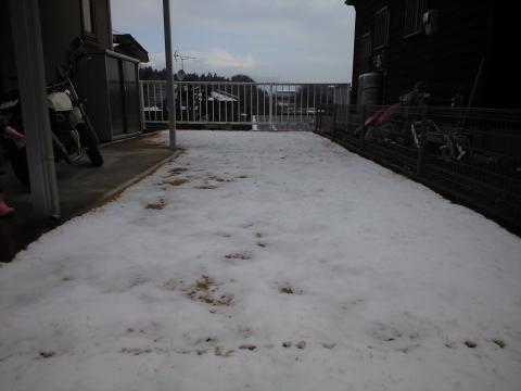 雪つもったぁ~