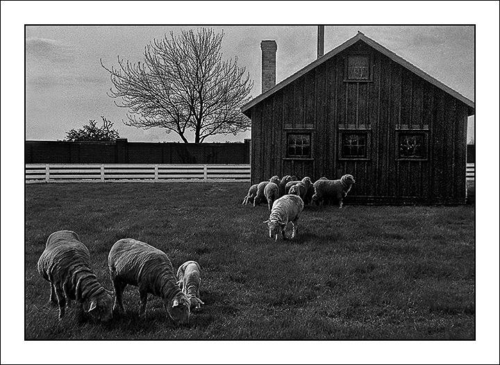 sheep117-blog3.jpg