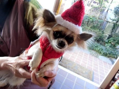 12.12.24ブログ用。木村さんの犬 (23)