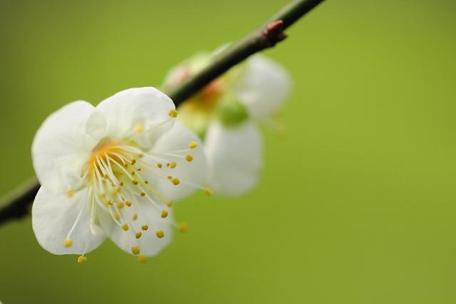 春の足音(2)