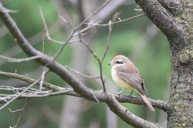 冬枯れと鳥(2)