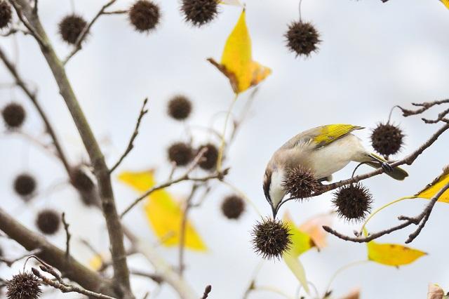 冬枯れと鳥(1)