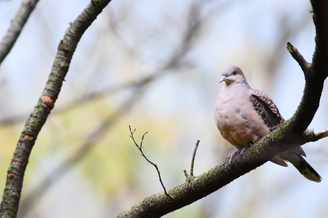 冬枯れと鳥