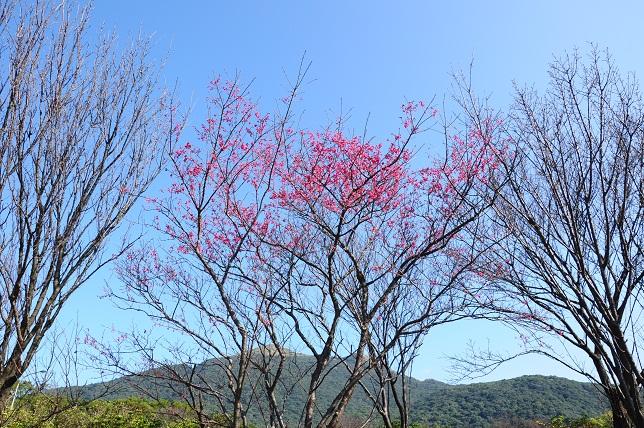 桜が咲いた(1)