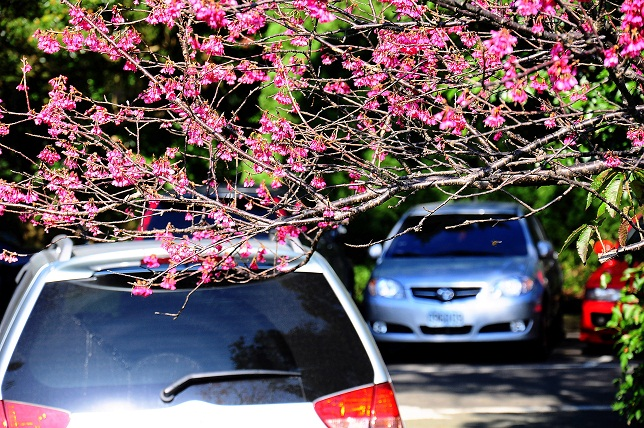 桜が咲いた(2)