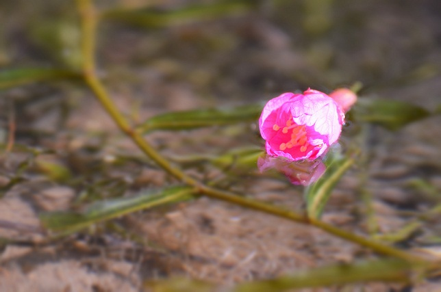 桜の季節到来(1)