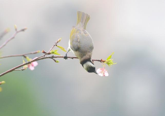 花と野鳥(2)