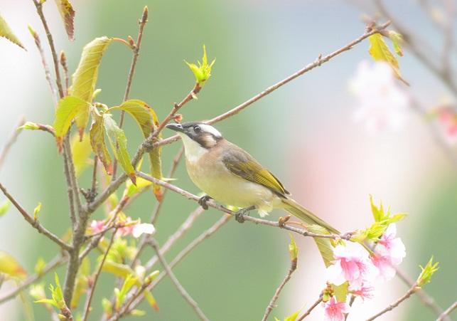 花と野鳥(3)