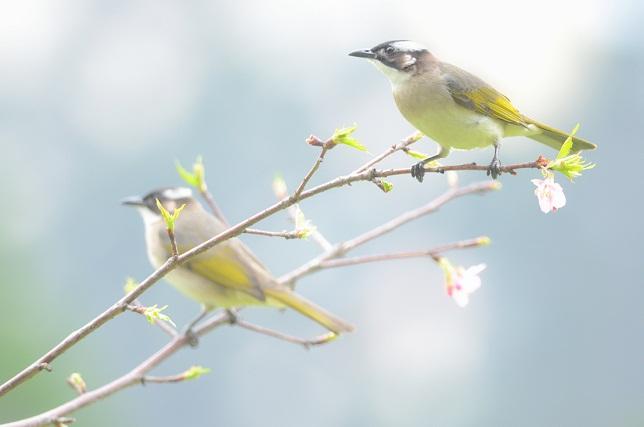 花と野鳥(1)