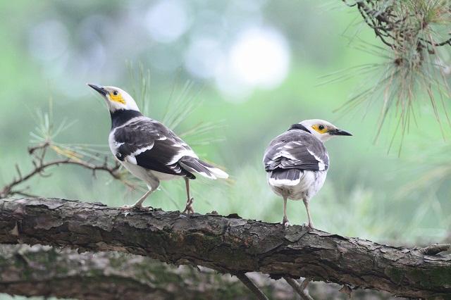 樹上の口喧嘩(2)