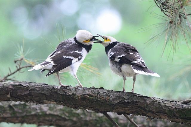 樹上の口喧嘩(1)