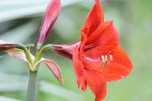 原色の花々(2)