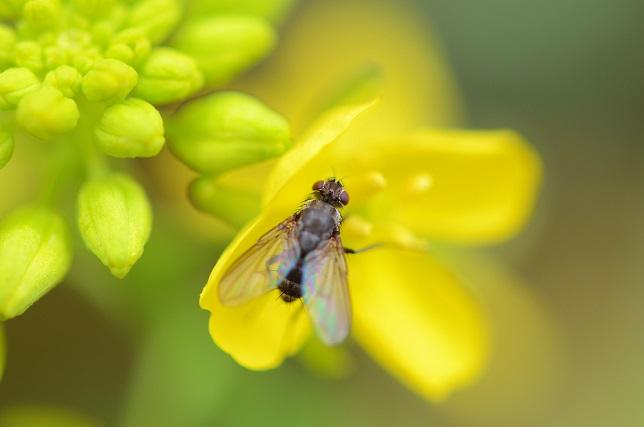 原色の花々(1)