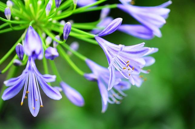 原色の花々