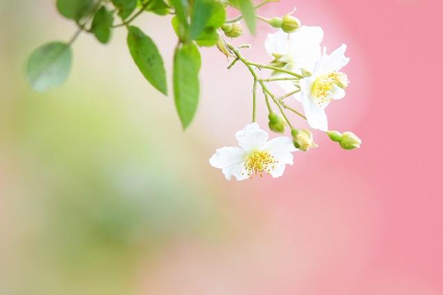 季節の花(1)