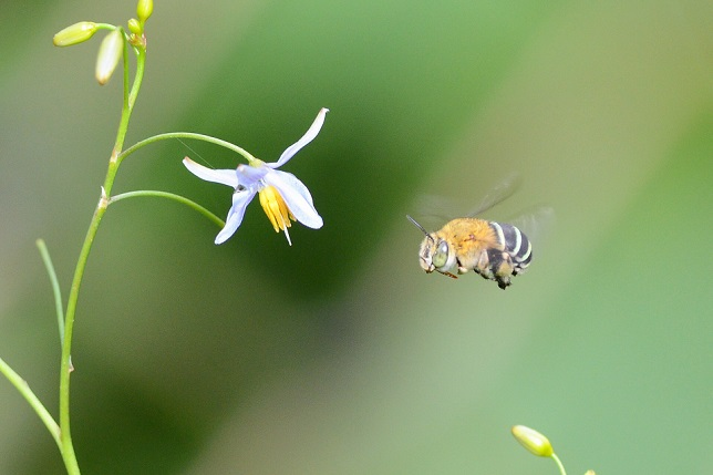 季節の花(2)