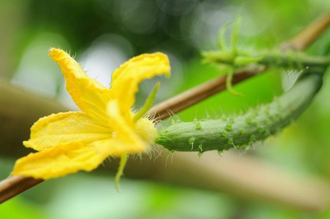 ノウゼンカズラが咲く頃に(1)