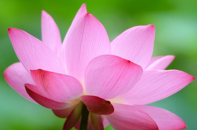 大輪の花(1)