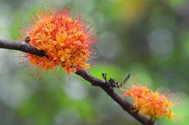 樹上の花々(2)