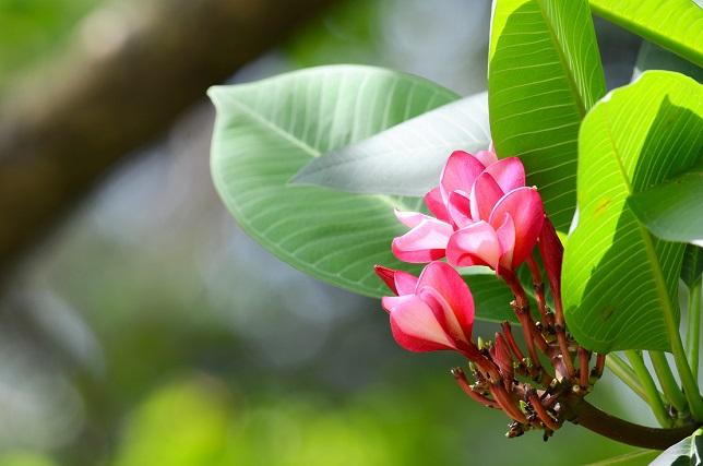 樹上の花々(1)