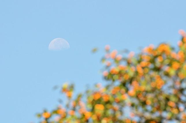 月の見える朝に(3)