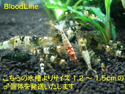 PhotoHenshu_20120913201809.jpg