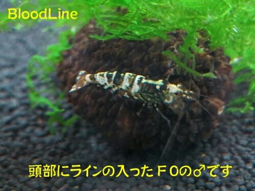 PhotoHenshu_20120913201846.jpg